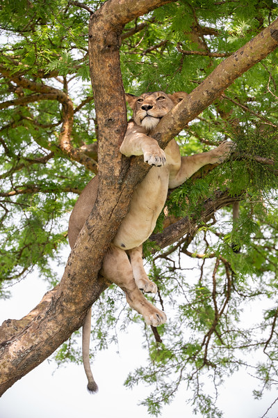 Uganda_T_QE-1490.jpg