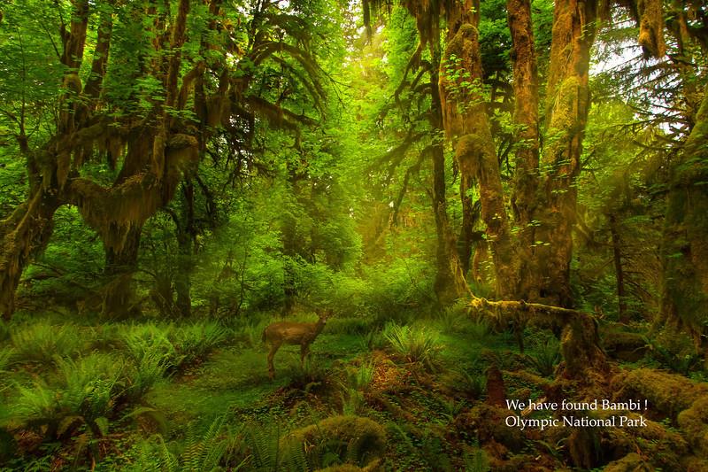 Bambi in Rainforestjpg009.jpg