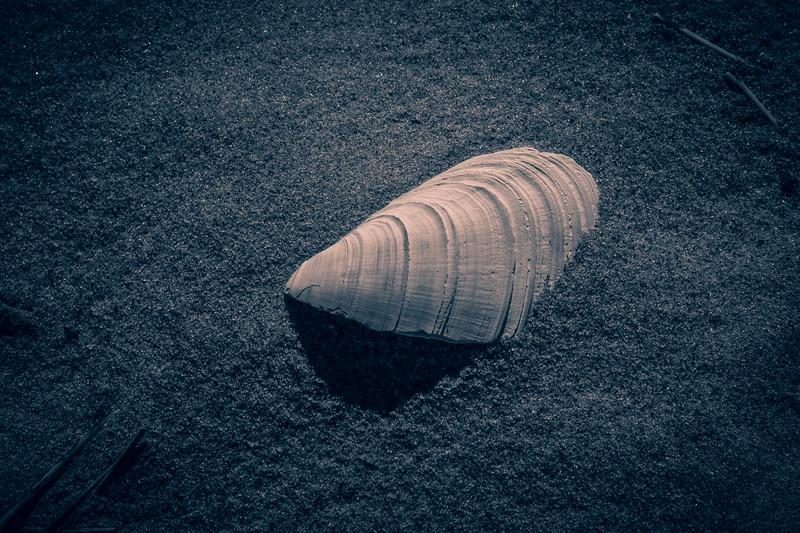 Shell-001
