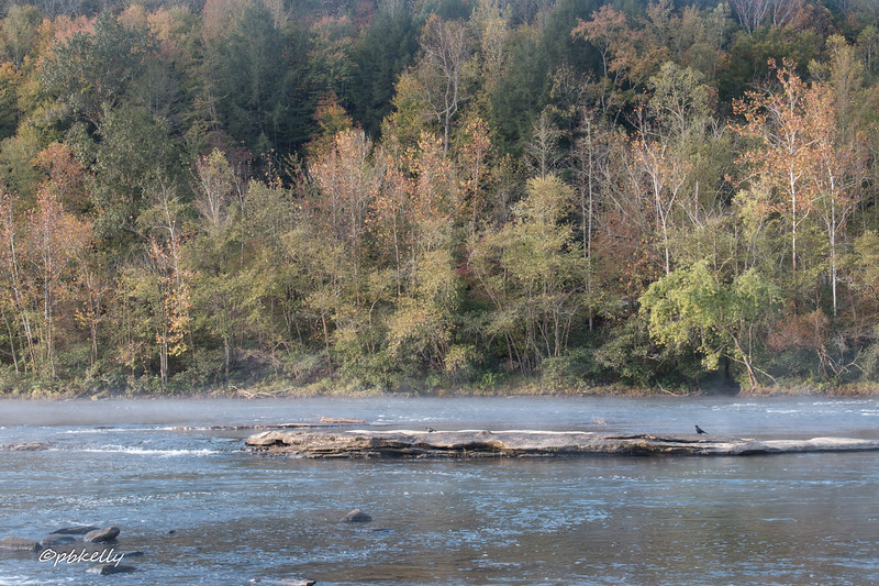 Another view of the Cumberland River showing a little Fall color and two of the many crows.