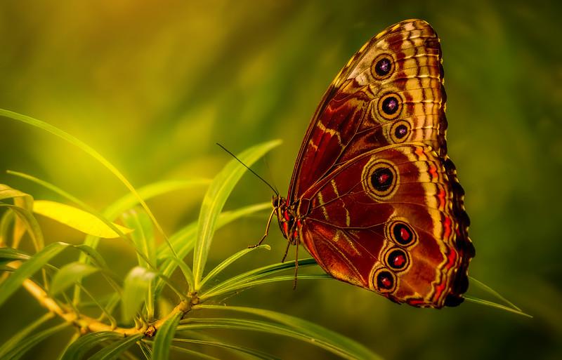 Butterfly-193.jpg
