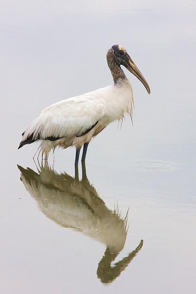 20110630 Click Pond Birds