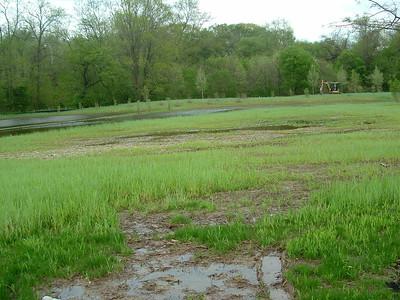 2011-04-29 Meadow