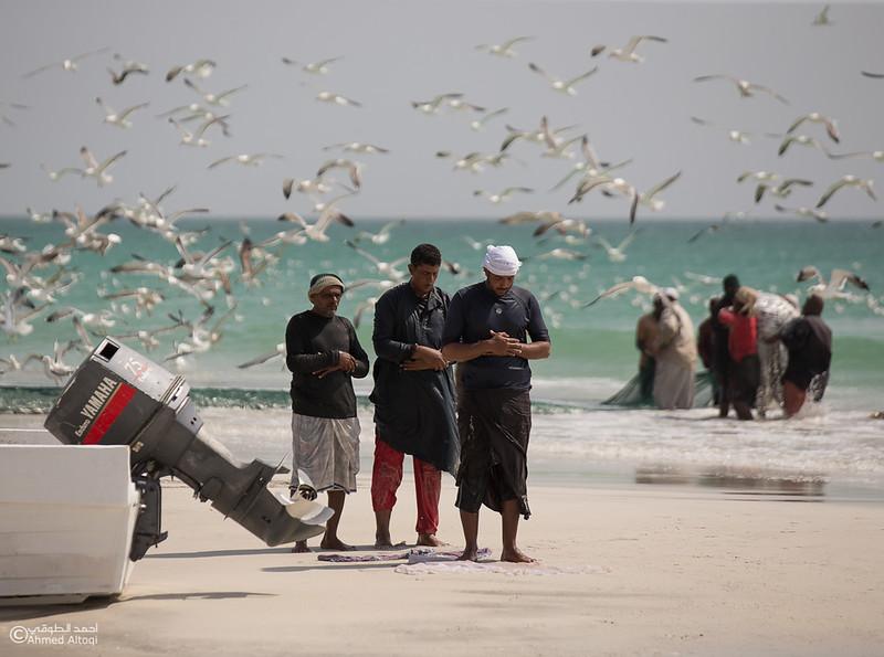 Sardine Season (11)- Dhofar.jpg