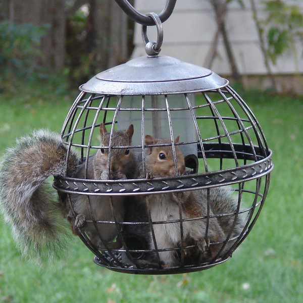 """October 16, 2007  """"Squirrel proof? HA! We laugh in your face!"""""""