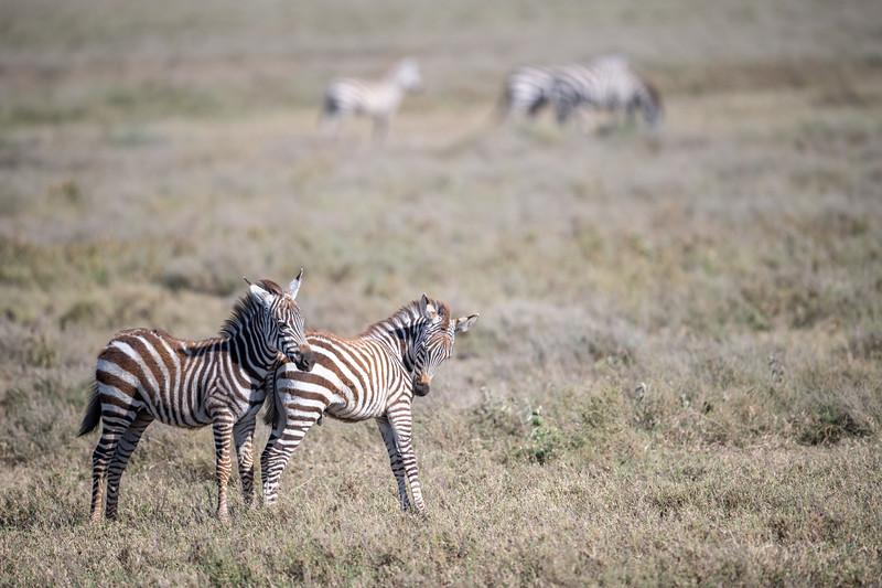 Tanzania_Feb_2018-409.jpg