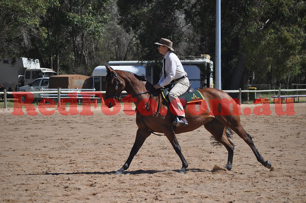 Australian Stock Horse State Champs