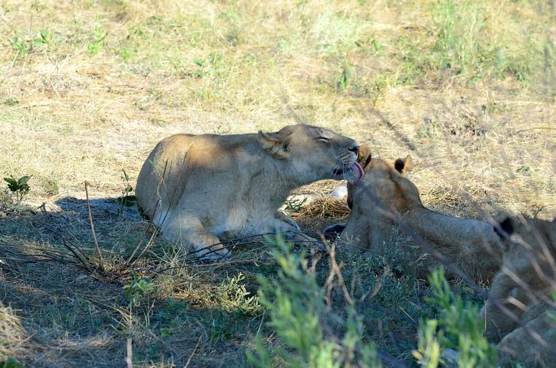 84 - Mom bathing cub - Chitabe - Anne Davis