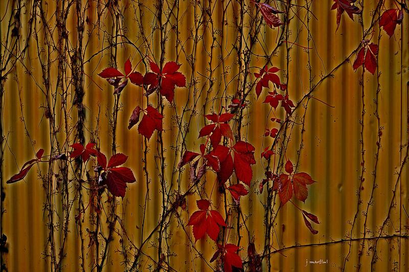 tin siding haiku 11-2-2010.jpg