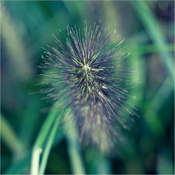 20111015_Flower2.jpg