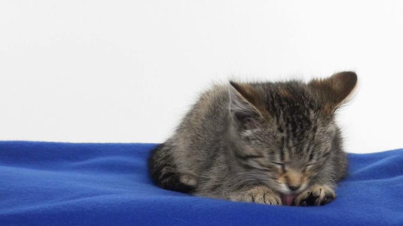 kitten_546_01.mov