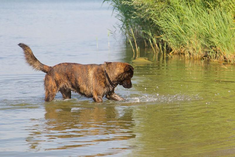 Klinkenbergerplas hond in water