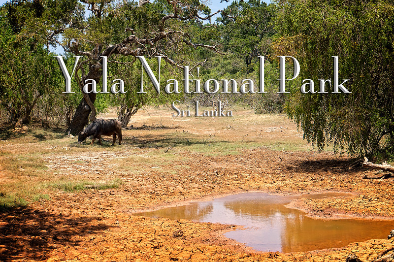 Yala National Pak