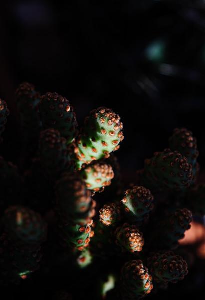 Cactus 110219-0360.jpg