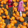 PUMPKIN FARM IN HALF MOON BAY