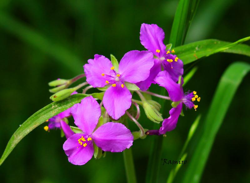 Purple flowers IMG_4449.jpg