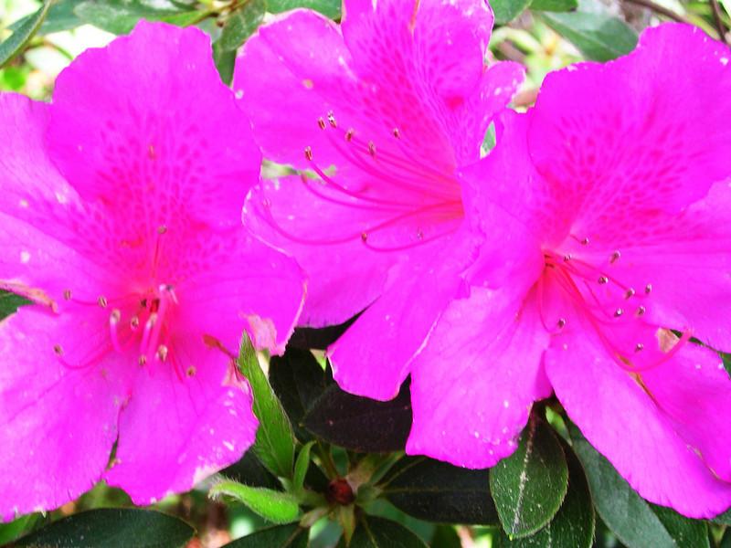 carolina flower 093.jpg