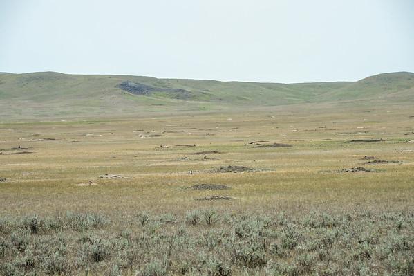 7-9-15 Prairie Dogs