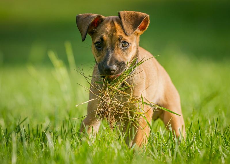 Wooja grass 9.1.2013-6689.jpg