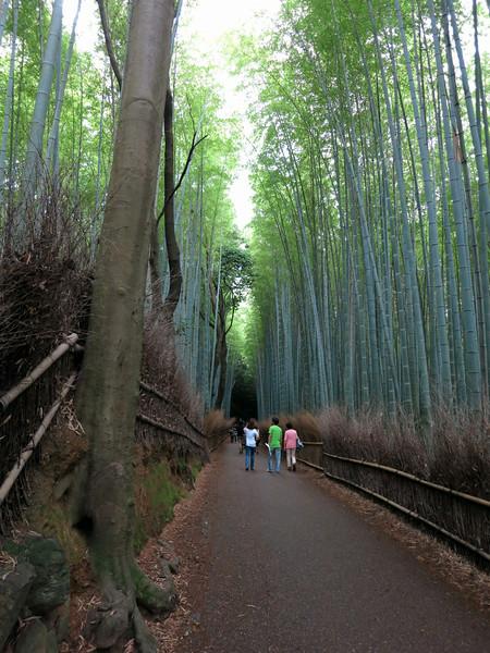 1967 Bamboo forest.jpg