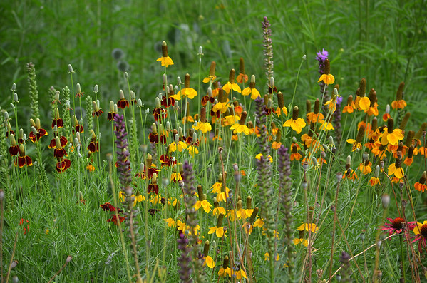 Longwood Gardens/Chantecleer Gardens/Morris Arboretum