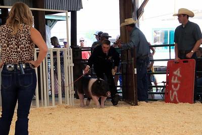 FFA Swine Showmanship