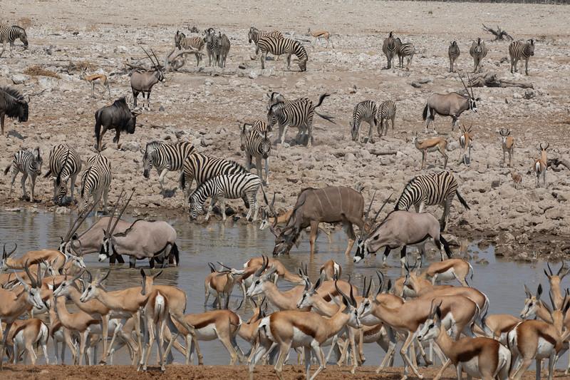 Namibia 69A8040.jpg