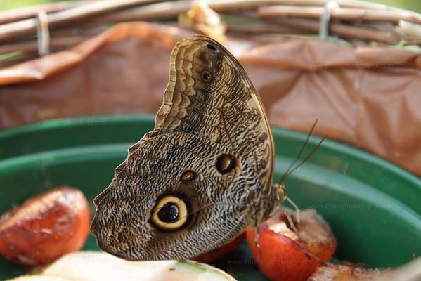 2011.07.31.EN - Butterfly Farm