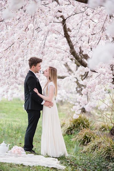 Cherry Blossoms (79 of 182).jpg