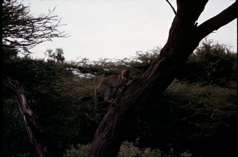 Kenya1_092.jpg