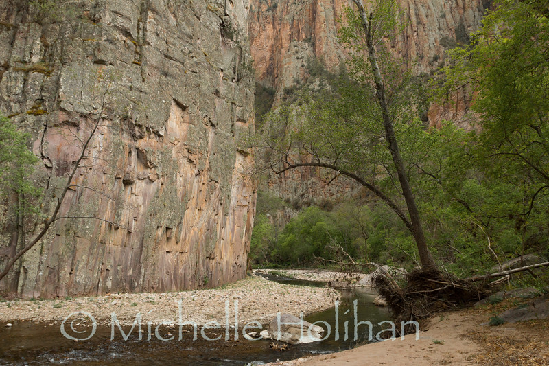 Middle Fork of the Gila River, New Mexico.