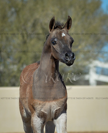 Ever After Foal