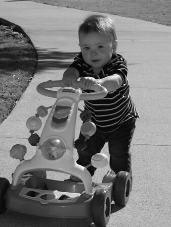 Colt at the Park