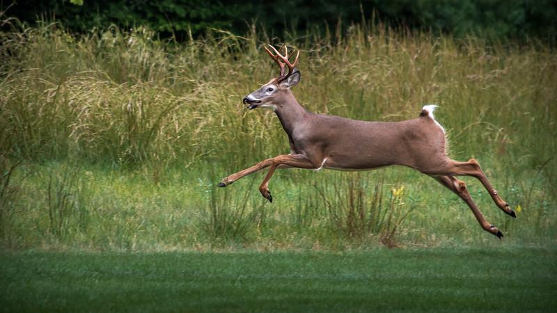 deer sept 19 2018 (6 of 8).jpg