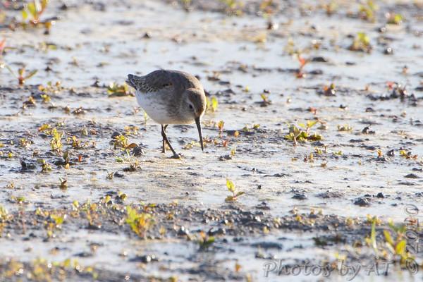 2010-10-03 Riverlands Migratory Bird Sanctuary