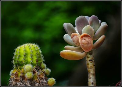 My Cacti 2