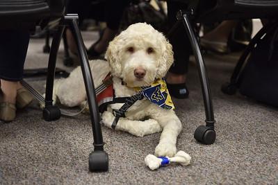 33146 Lucas Pharmacy Service Dog Feb 2017
