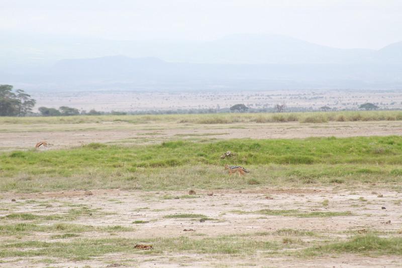 Kenya 2019 #2 354.JPG