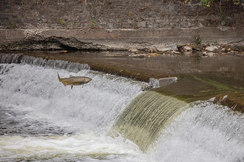 salmon upstream (40 of 48).jpg