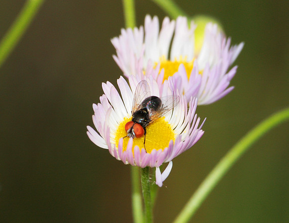 Insects/Macro