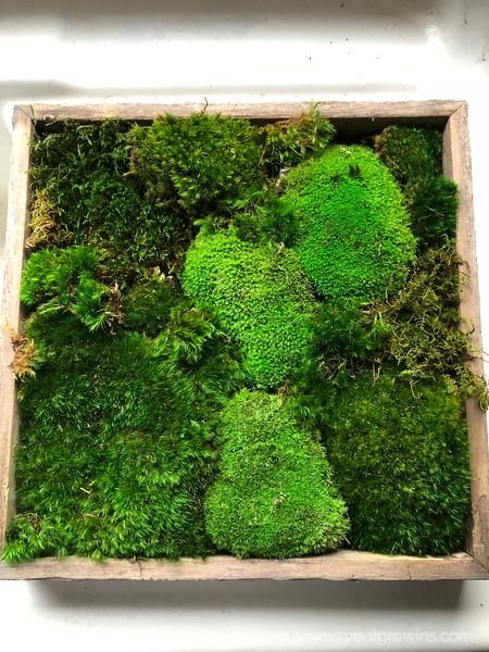 Preserved Moss Varieties.JPG