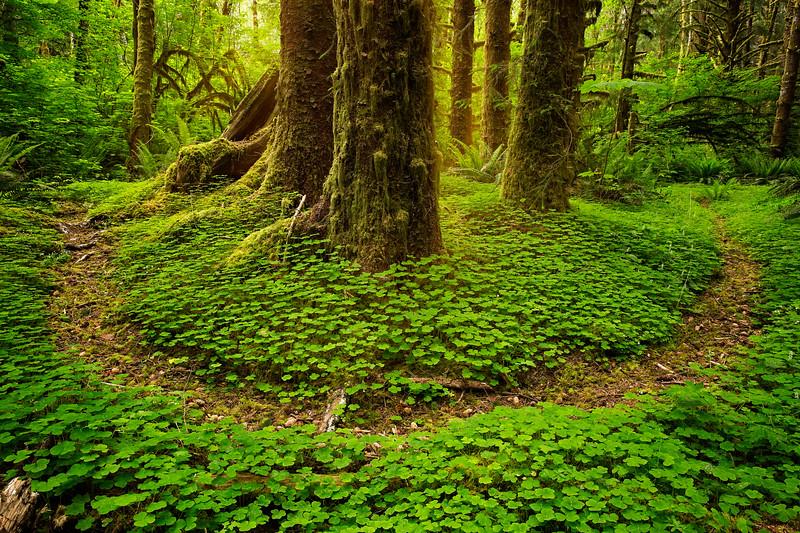 forest path u shape.jpg