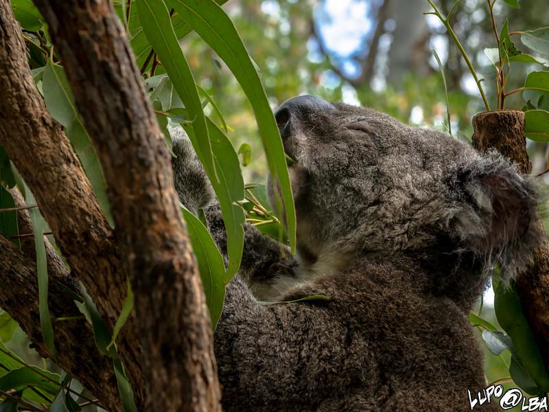 Australia-1049.jpg