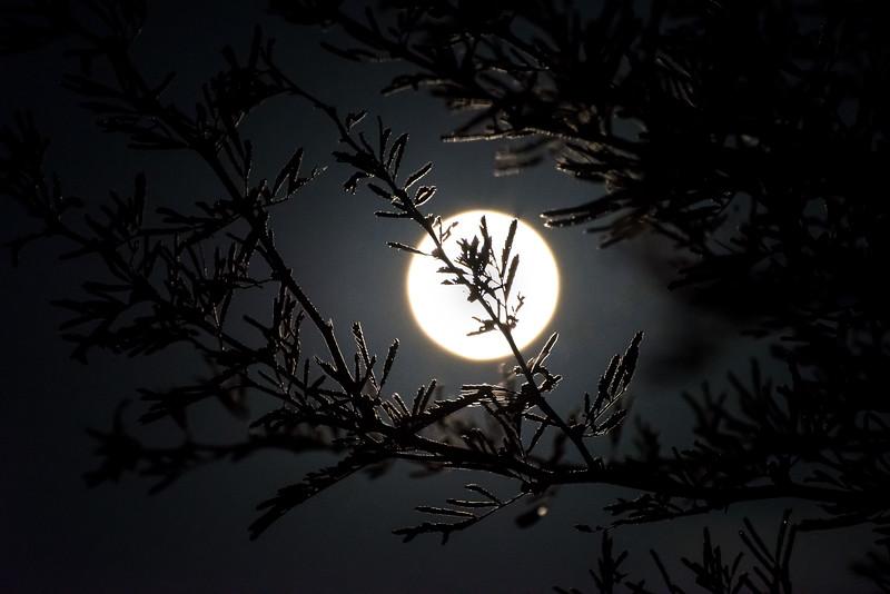 Moon through a dewy tree branch