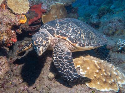 Saba Dive Trip