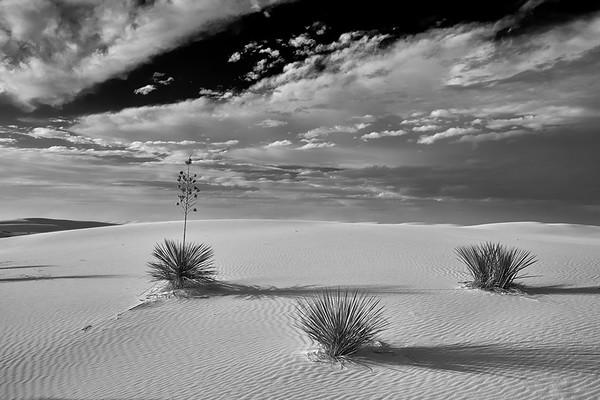 White Sands B/W