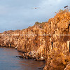 """Wildlife, landforms & landscapes of the Galapagos Islands.<br /> Dramatic cliffs of Genovesa Islands, Darwin Bay at sunset.<br /> Volcanic Island landform.<br /> Photos, prints & downloads SEE ALSO:  <a href=""""http://www.blurb.com/b/3551540-galapagos-islands"""">http://www.blurb.com/b/3551540-galapagos-islands</a>"""