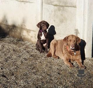 Doggy Daycare - December 2013