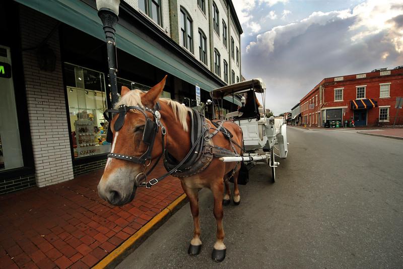 Savannah horse and carriage1.jpg