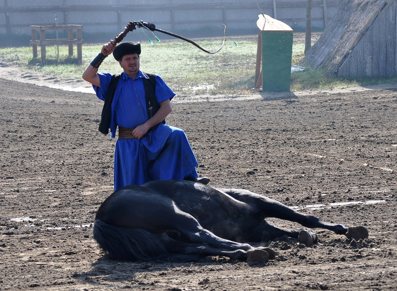 In war it was a valuable skill to be able to get the horse down on the ground, an unnatural position